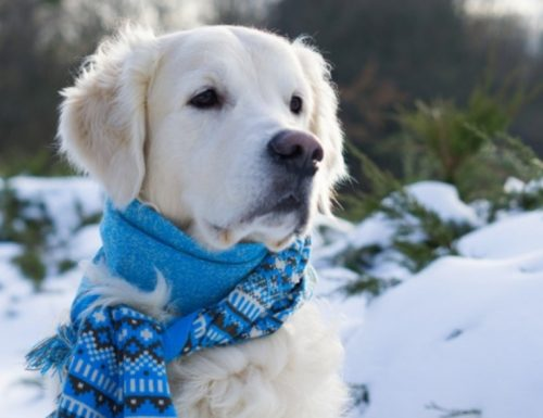 Keeping Your Pets Healthy and Happy During Winter
